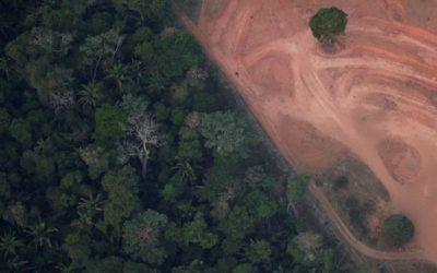 Brésil : une déforestation record dans la forêt amazonienne en avril